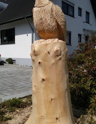 Adler 35
