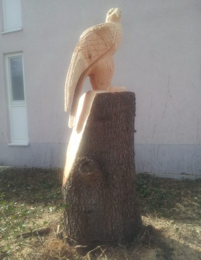 Adler 6