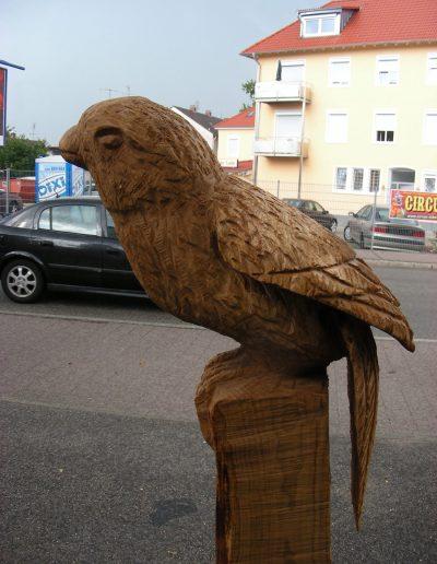 s.Vögel-13